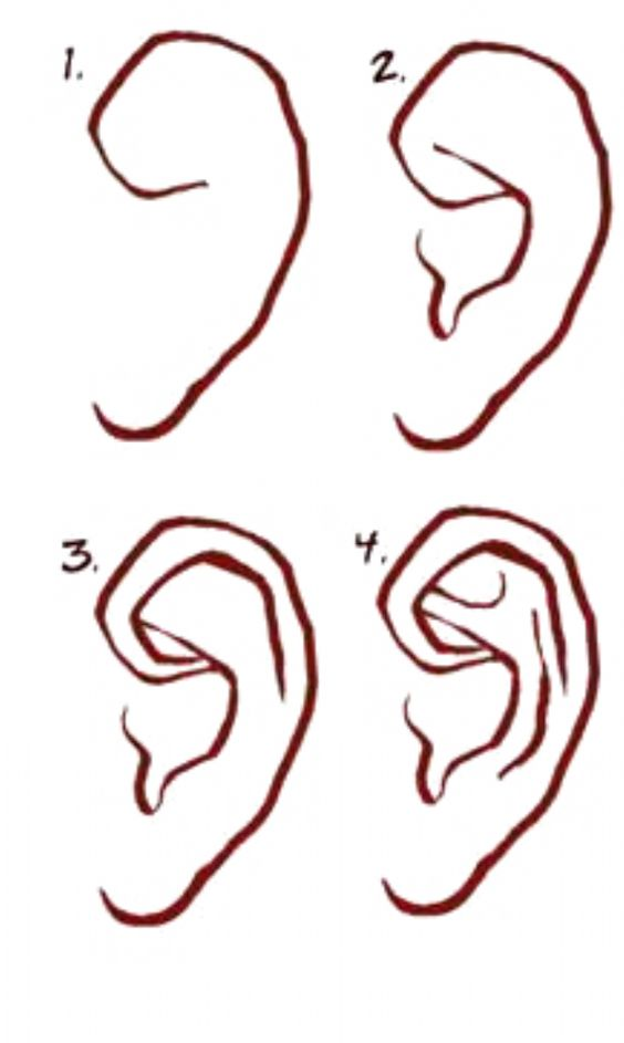 Ears - Step by Step Guide to Draw