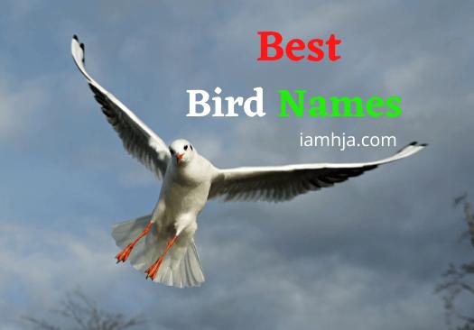 Best Bird Names